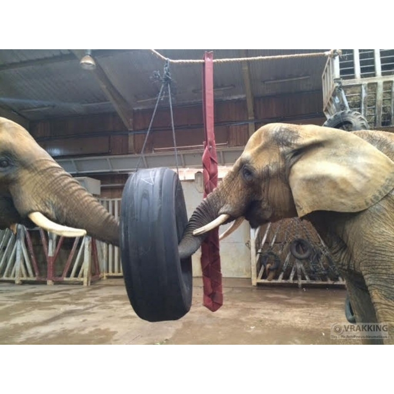 Elephants strength test aircrafttires